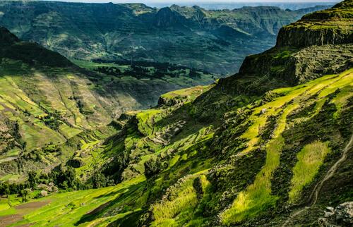 In Äthiopien liegt die Wiege der Arabica-Bäume.